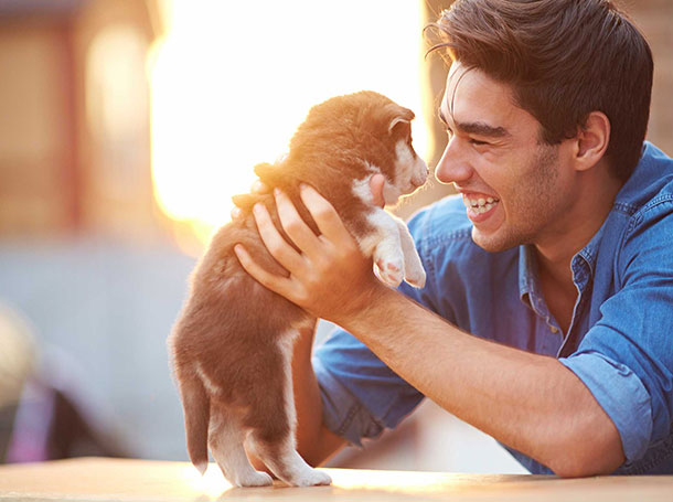 Pet Buy & Sell - Pet Engage - Pet Relocation - Online Pet