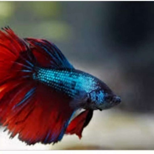 fish - Fish - Buy and Sell Pets in Lahore
