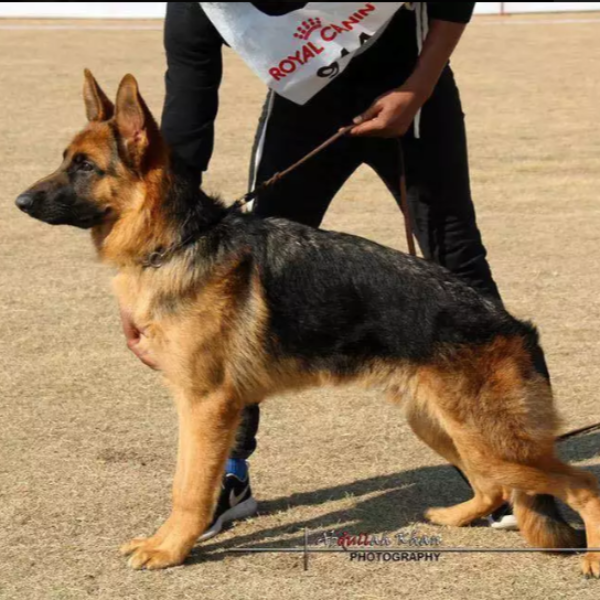 fricki| Dog | sell | Agent pet - Dog - Buy and Sell Pets in