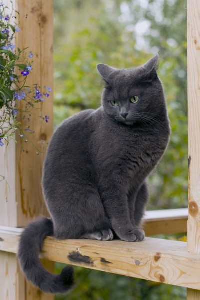 Handsome - Cat - Buy and Sell Pets in Lahore