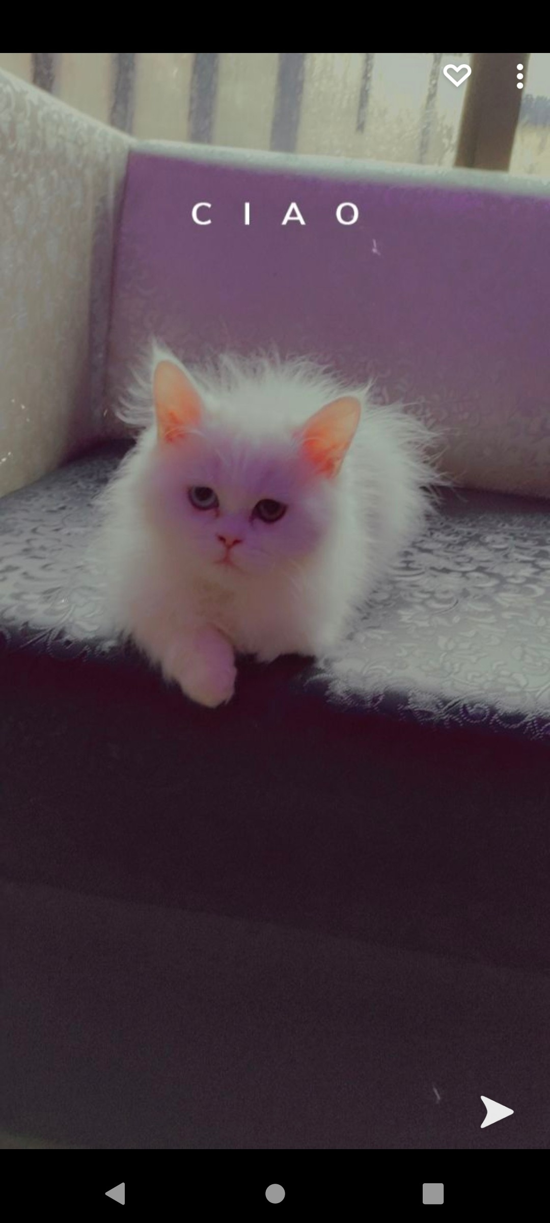 Fairy - Cat - Buy and Sell Pets in Burewala