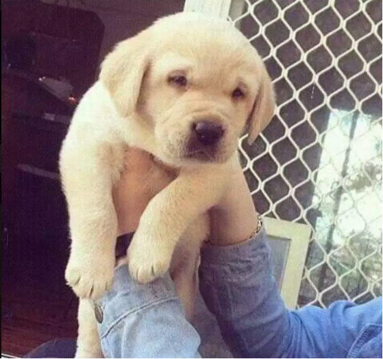pup- puppy for sale - Dog - Buy and Sell Pets in Karachi