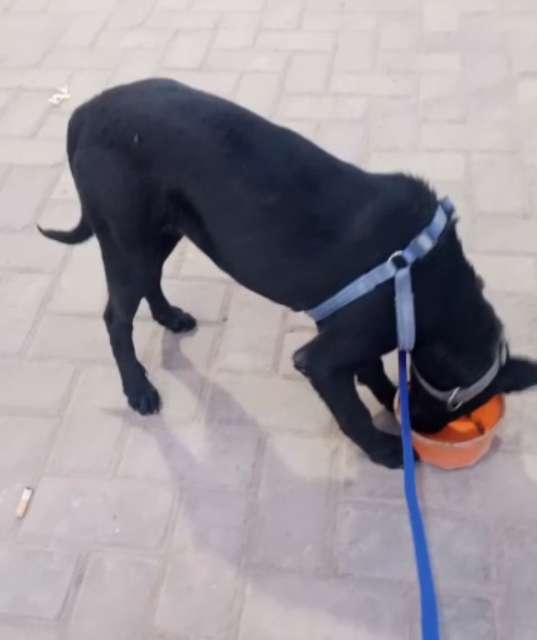 Dog - Dog - Buy and Sell Pets in Lahore