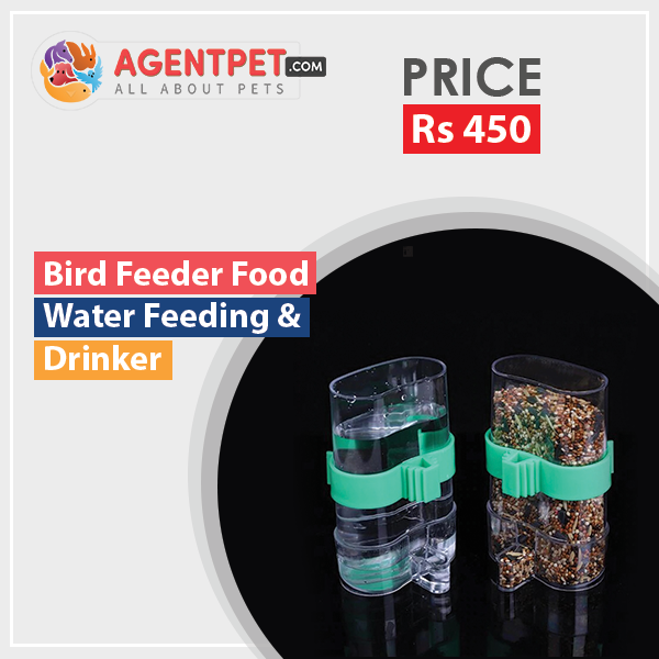 Can store water Bird Feeder Food Water