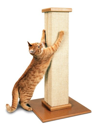 Scratching Post for Cat - Pet Accessories - Pet Store - Pet supplies