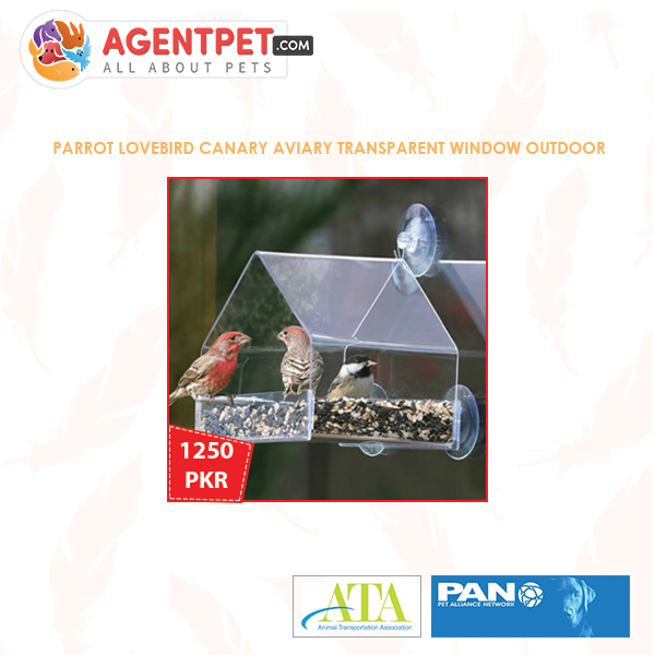 Parrot Lovebird Canary Aviary Transparent Window Outdoor