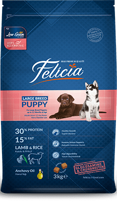 Felicia Dog Large Breed Puppy