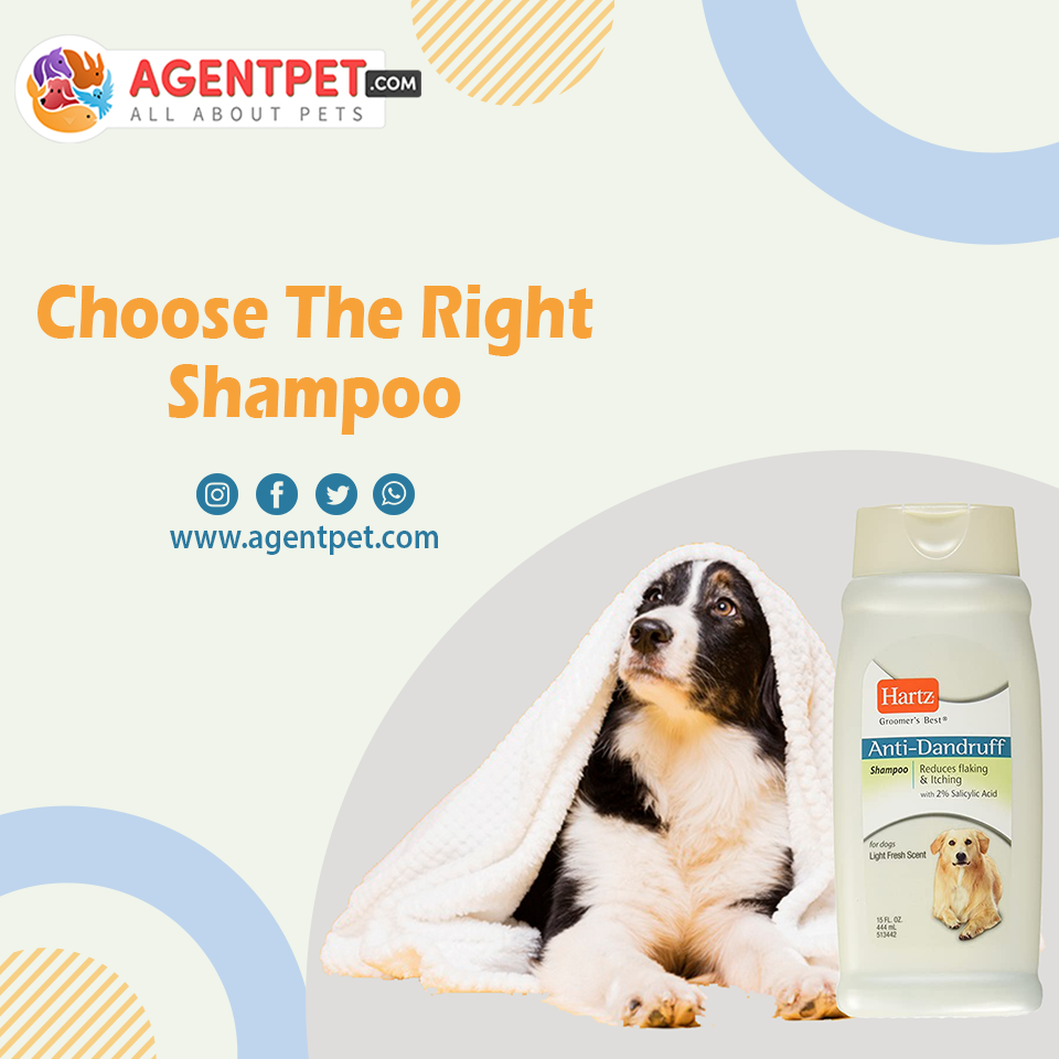Hartz Anti Dandruff Shampoo - Pet Accessories - Pet Store - Pet supplies